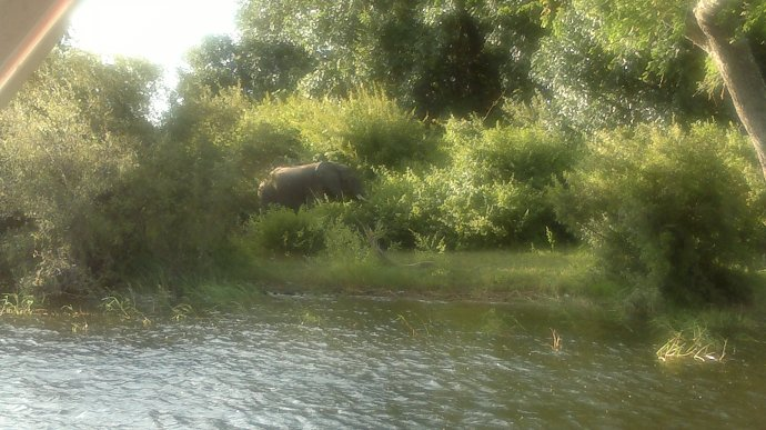So a group of large elephants on the banks of the Zambezi River